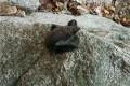 멸종위기종 '큰귀박쥐' 북한산서 첫 발견